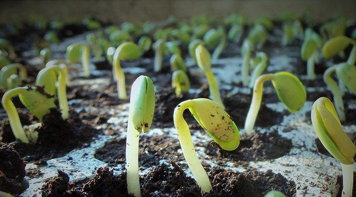 Zasady efektywnego wysiewu nasion