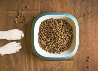 Karma dla psów i kotów z nietolerancjami pokarmowymi